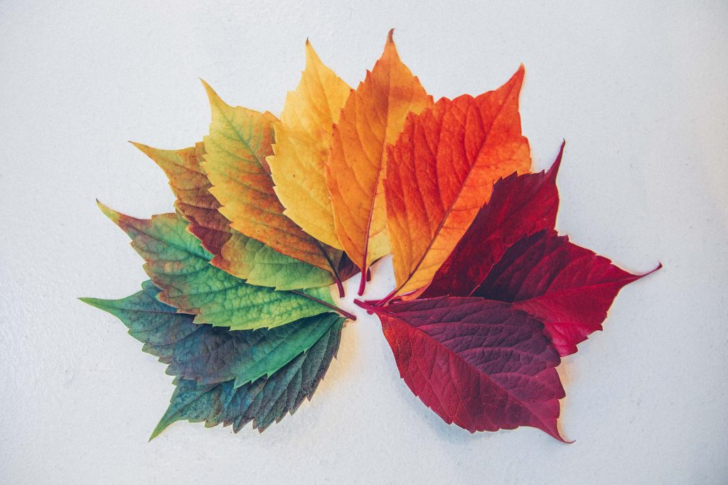 http://Colorful%20leaves%20forming%20maple%20leaving